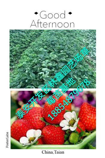 泰安开发区林鑫园艺场是一家集果树苗,绿化苗批发,培育,销售于