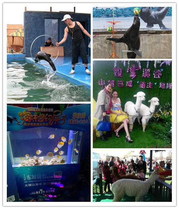 浏阳市海狮表演出租专业公司