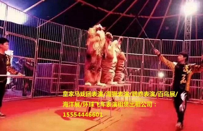 呼和浩特市企鹅展览租海豹海狮表演房地产庆典活动   羊驼在国内价格偏高,国外不到1万,国内山西5万,3.5万,北京4万。羊络搞笑动物表,其又萌又呆脸给人们冠上了文字介绍而成名。本拥有这丰富租展,先后xydwzlgs从事上百场会展租赁服务,可以提供活动方案和策划,一式服务免除您后顾之忧。    皋兰活体动物租租赁动物马戏表演租租赁首先考虑为羊驼足够大空间和适合它设计,地理位置将会影响到畜舍设计。北部地区,封闭畜舍一般设计来防范极冷、强风气候状况,而在南部地区,三面围畜舍更适合夏日微风,羊驼能够抵抗寒冷天气