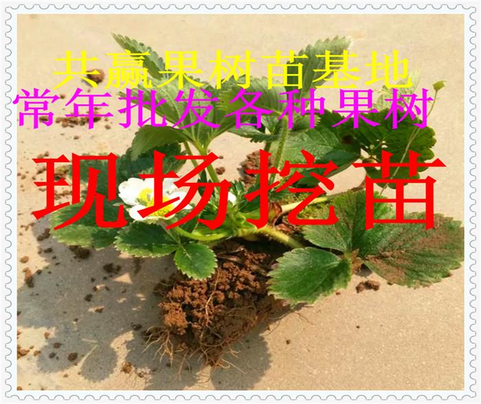 常绿和落叶植物配置