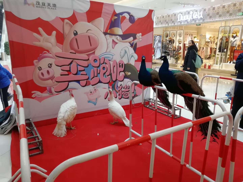 马展览价格多少湖北省英山县供商租赁