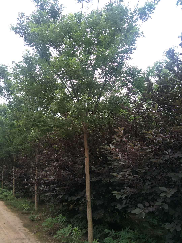 河南九月份风景图片