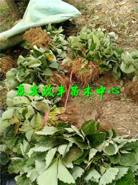 青海民和县中川乡风景