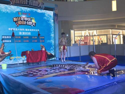 嵊州市海狮表演出租价格当地海洋馆