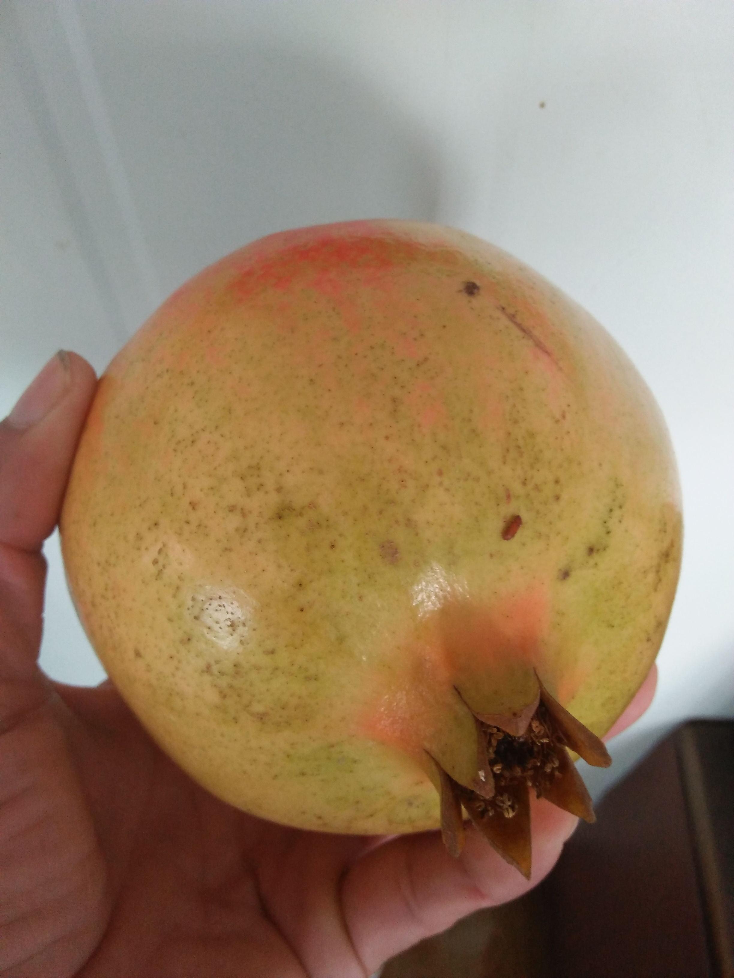 延安分类信息网陕西延安苹果树苗多少钱