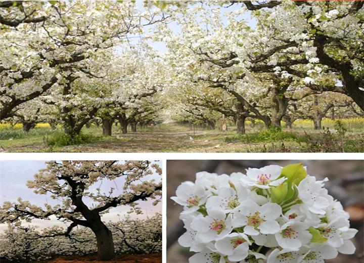 纯色树小清新背景素材