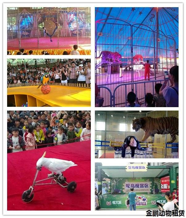 武威市哪有出租鹦鹉表演百鸟展的