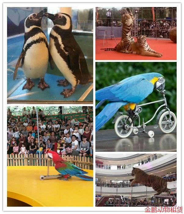 宁德市附近哪里有出租海狮表演马戏团表演的