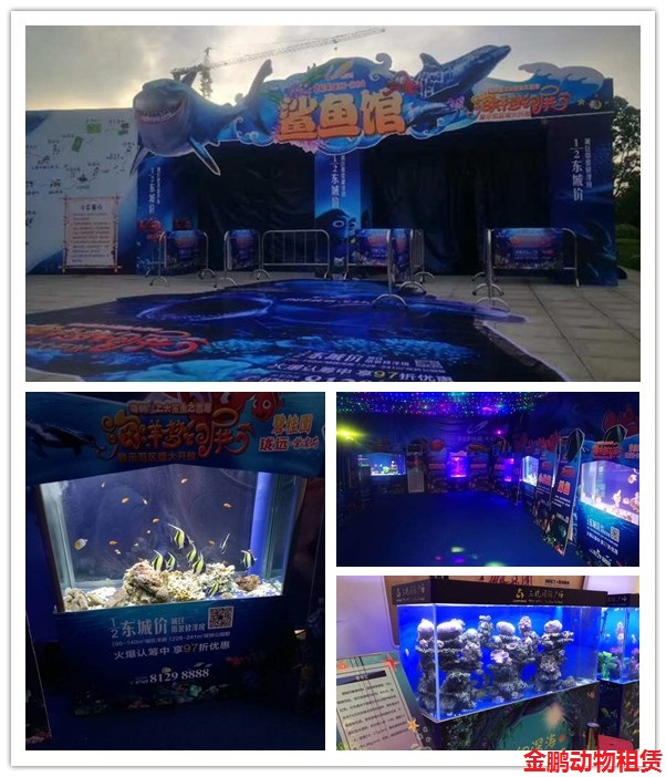 东阳市附近哪里有出租海狮表演马戏团表演的