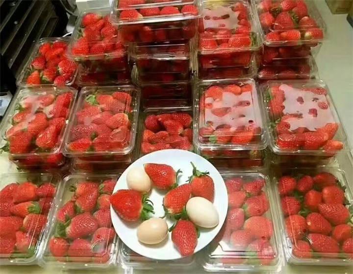 河南周口草莓苗什么价位(章姬草莓苗批发出售)