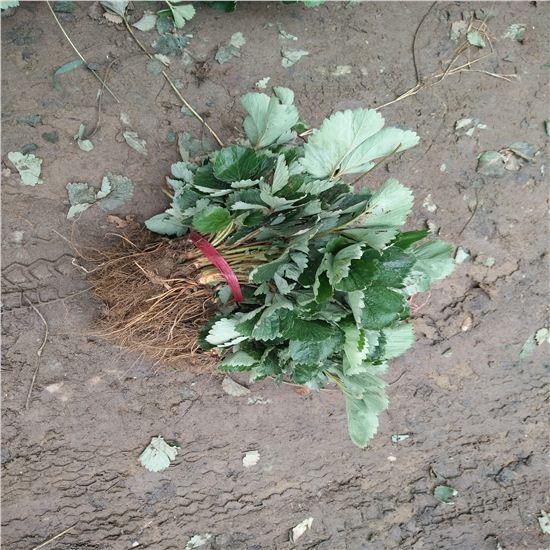 手绘整根藤蔓背景图片