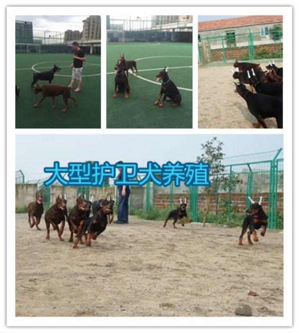 蚌埠市养狗场,幼犬出售电话多少