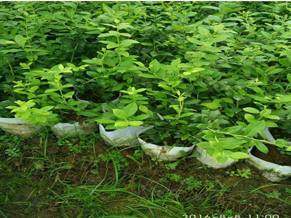 树苗成长风景图片