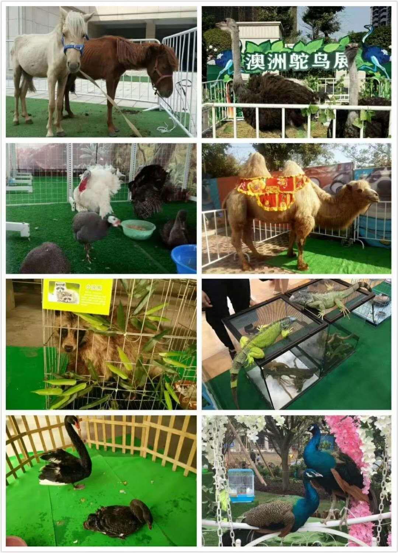 我们场推了动物展览新创意,创意主题有羊驼租,萌宠展览,动物乐园,农场