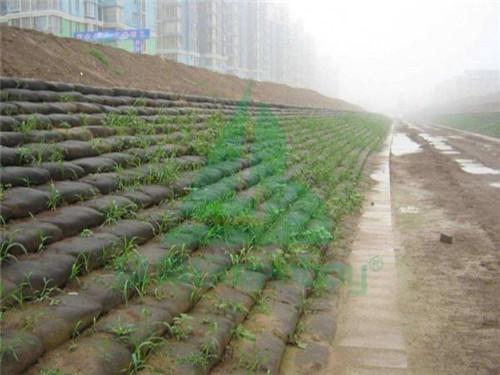 道路护坡绿化效果