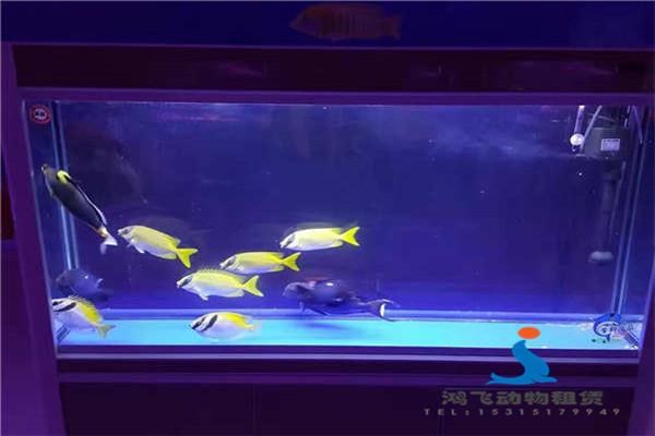 菏泽市大型马戏团表演动物表演出租