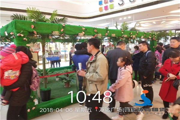 海南省各种百鸟展鹦鹉表演出租