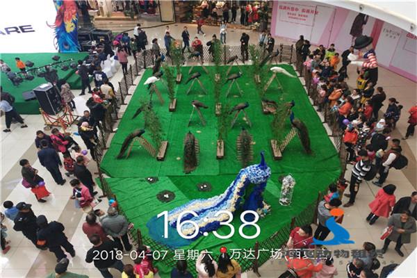辉县市出租企鹅展的大型演艺