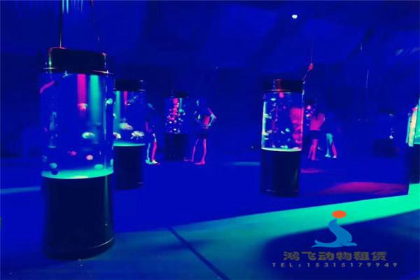 铁力市大型马戏团表演动物表演出租