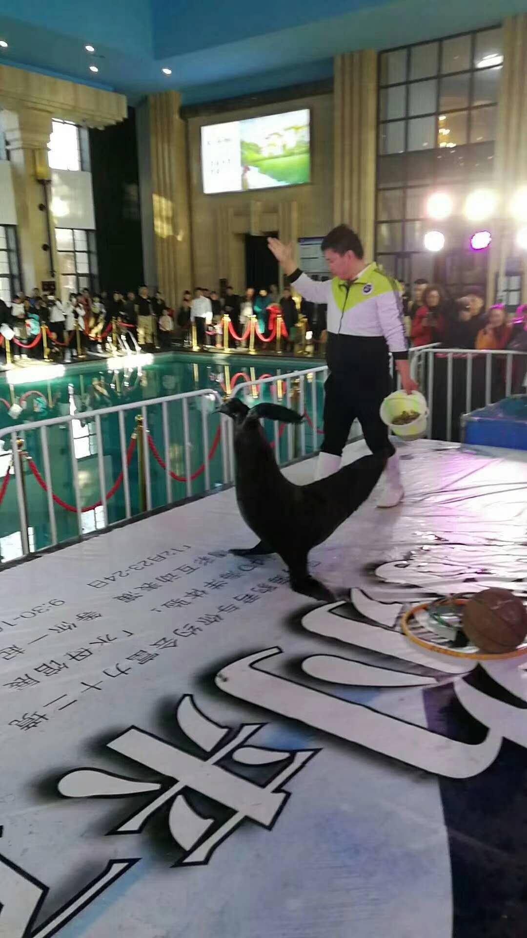 徐州丰县马戏团演包运输