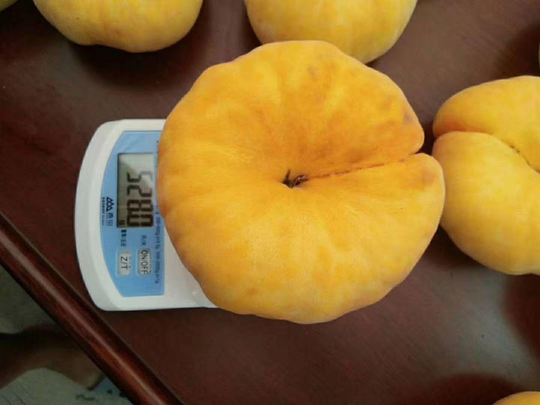 宁夏自治新川中岛桃树苗种植基地_多少钱一棵