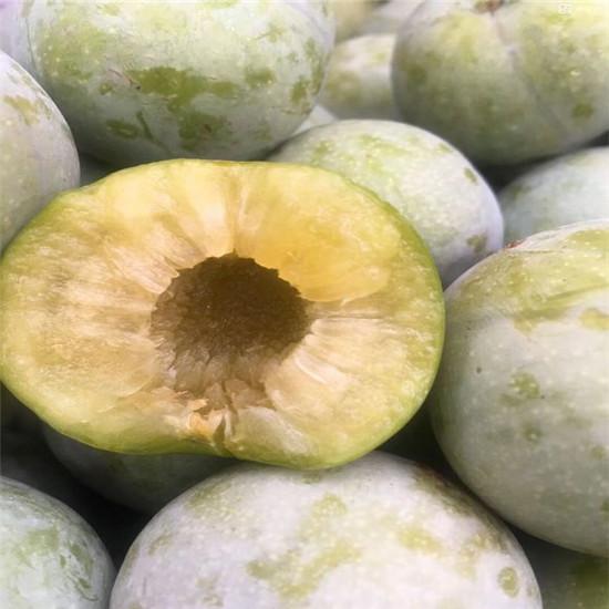 哪里买脆红李子树苗,脆红李子树苗培育基地 泰安开发区吉祥苗圃