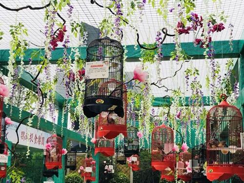 平鲁春节元宵节哪里有百鸟园展览商场开业