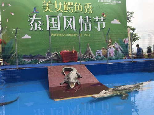 铁山区骆驼租赁公司多少钱一场 武汉水族批发市场 武汉龙鱼第3张