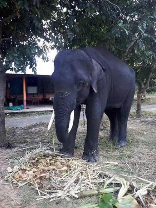 郓城县2019年哪里有大象演出电话