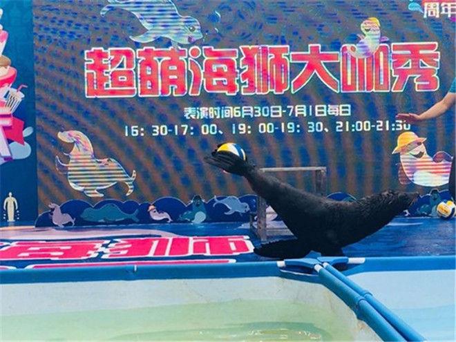 台州海狮表演出租地产动物表演暖场活动资源价格