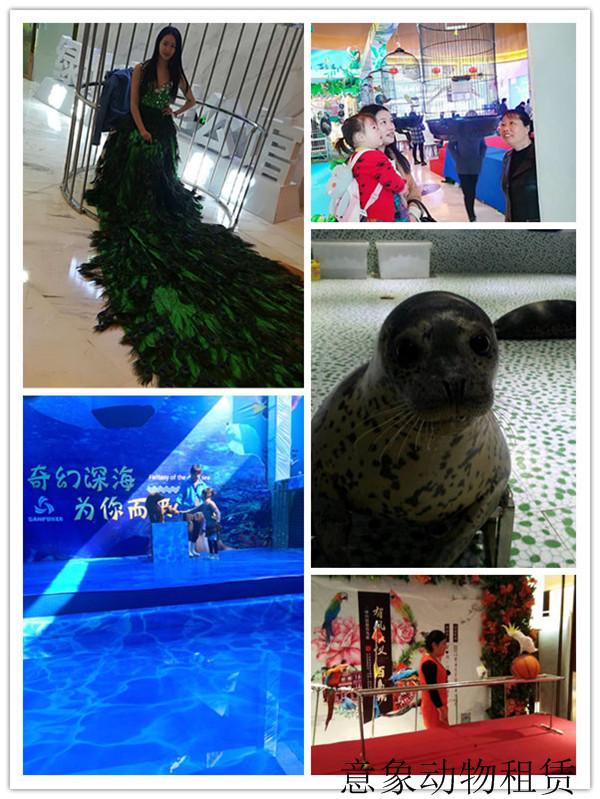 沅江马戏团表演环球飞车租赁