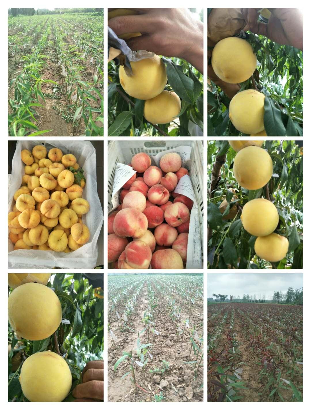 临沂市河东区诚运发苗木种植专业合作社