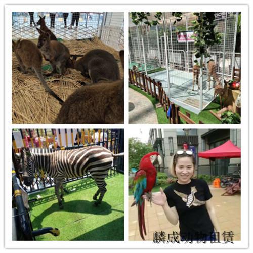 河南封丘市策划马戏团表演出租优惠多多 行业新闻 丰雄广告第5张