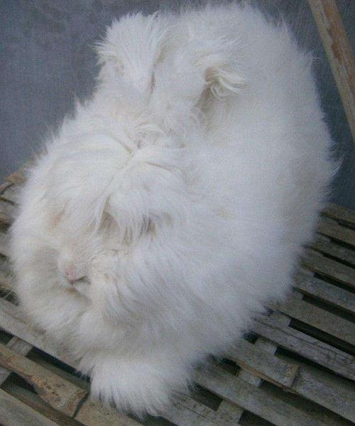 郴州市家禽养殖出售肉兔优惠多多