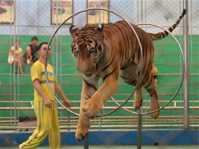 然后细分析这些动物表演需要的场地大小,客流量来区分需要动物的