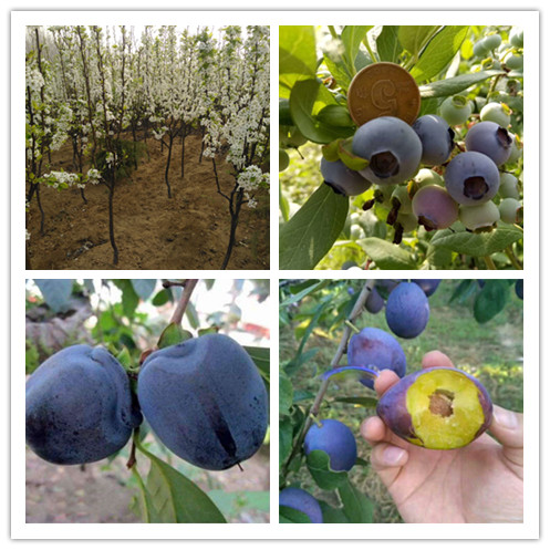苹果的生长过程步骤图