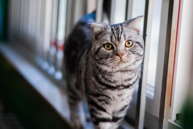 qq头像可爱动物茶杯猫