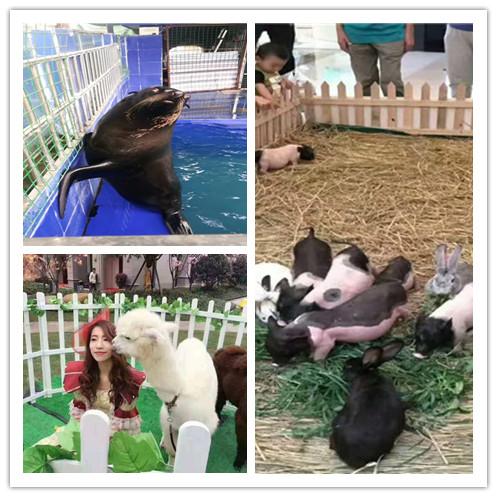 六安市海洋生物鱼缸展出租