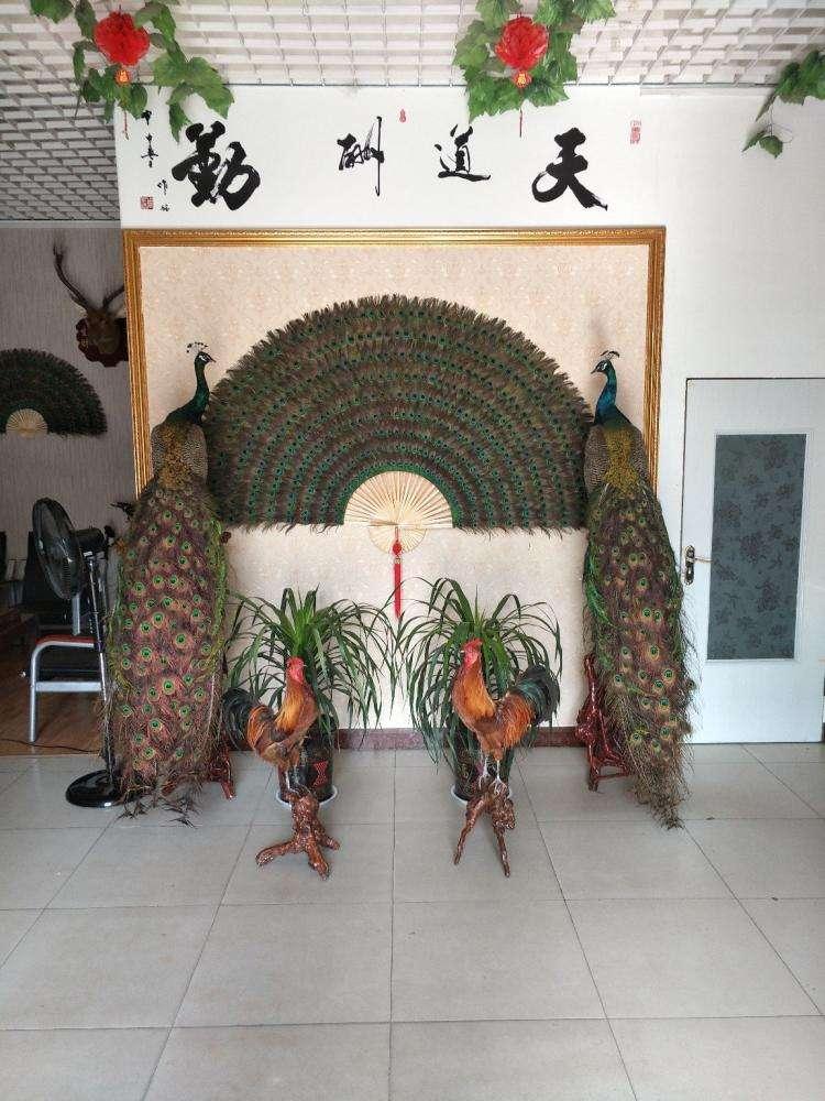 專用雕刻機展廳擺件孔雀標本多少錢一架廠家直供