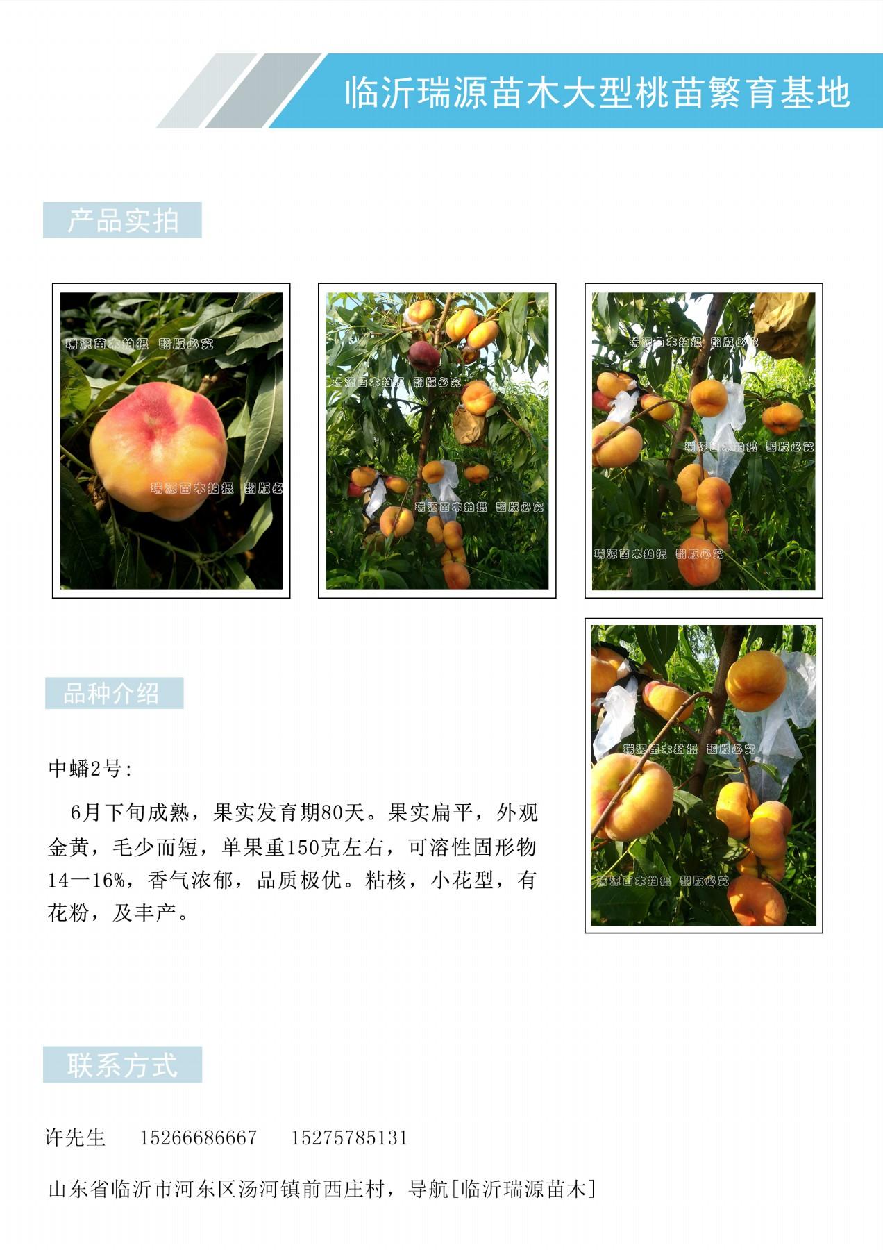 麗水錦繡黃桃每畝多少棵苗、麗水品種簡介