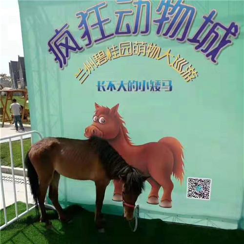 崇左天等萌宠动物展览出租萌宠羊驼