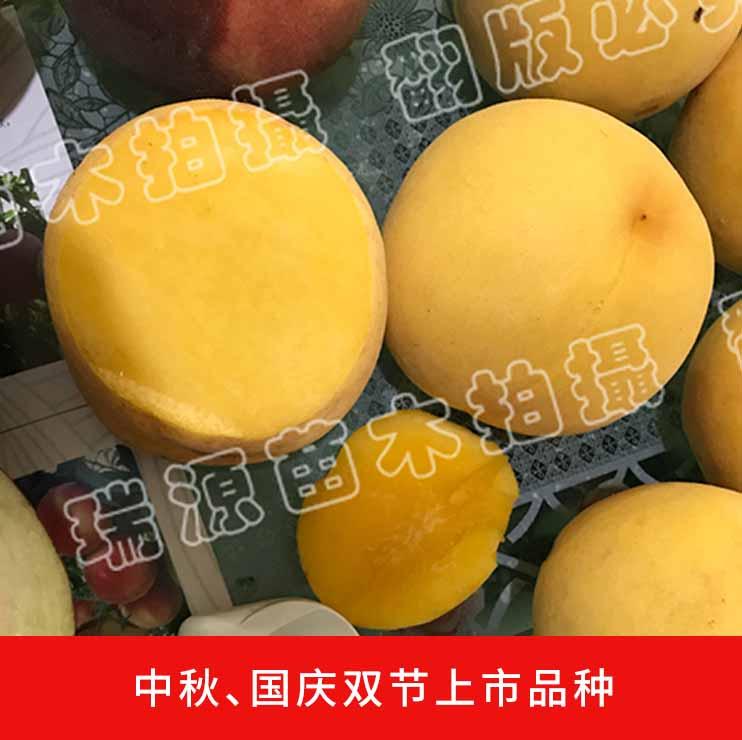 永州桃子苗批发多少钱_桃树苗价格_哪个好