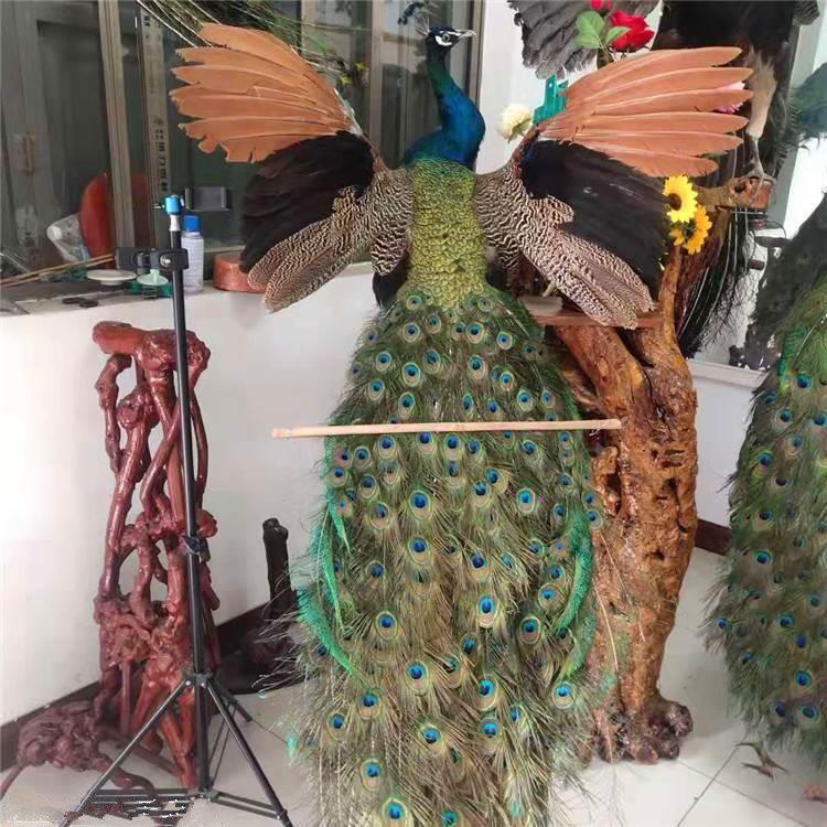 孔雀标本蓝孔雀标本,工艺品摆件欢迎来厂参观选购