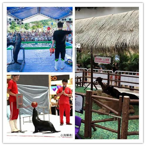 池州萌宠动物表演出租展览展示中心