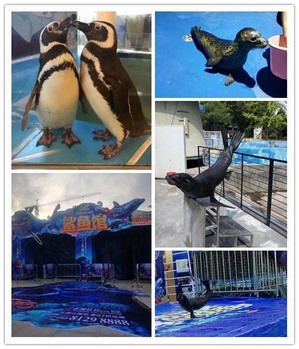 淄博市海狮企鹅表演租赁节目丰富