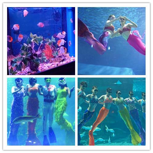 四川遂宁市哪有出租海狮表演的