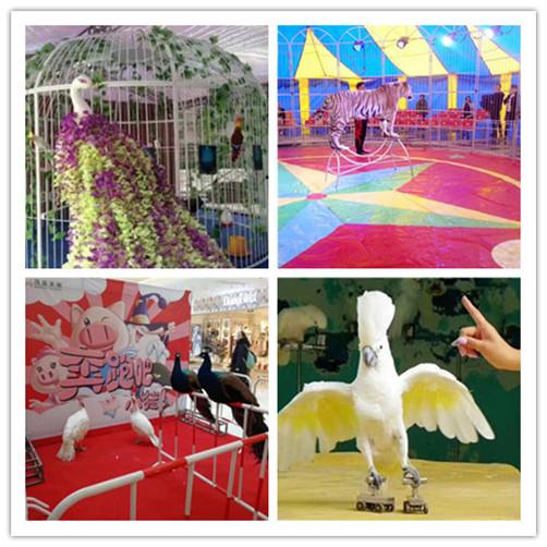 岑溪市羊驼展览出租大型庆典