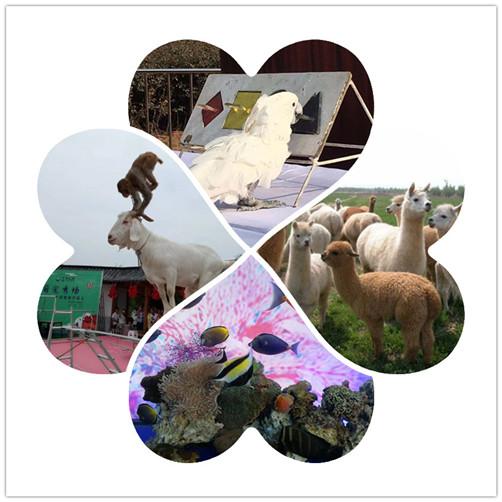 临沧周边萌宠羊驼出租