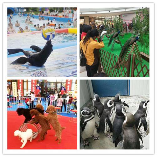 贵阳市海狮企鹅表演出租租赁