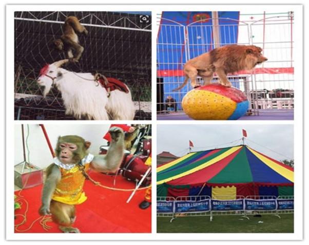 桦甸市羊驼展览出租大型庆典